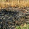 У Чишках горіла суха трава