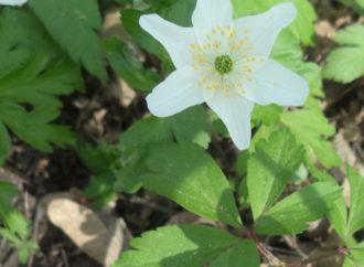 Весна у Винниківській діброві