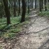 Розпочалася акція «Майбутнє лісу у твоїх руках»