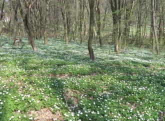 Розпочалося громадське обговорення детального плану забудови, що межує з Винниківським лісопарком