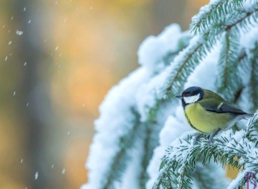 Нарешті прийде зима? Синоптики дали прогноз погоди на 23 січня