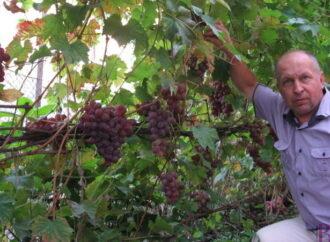 Голові Асоціації винниківських виноградарів Роману Бадуню – 50!!!