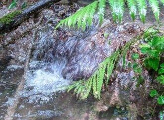 На витоках р. Маруньки у винниківському лісі екологи знайшли рідкісні травертинові джерела