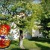 Прем'єра театру Народного дому: казочка про Червону Шапочку на винниківських теренах (відео)