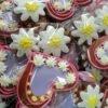 Орієнтація на легкість і красу: весняне оновлення виробів у кондитерській «Le Plaisir»